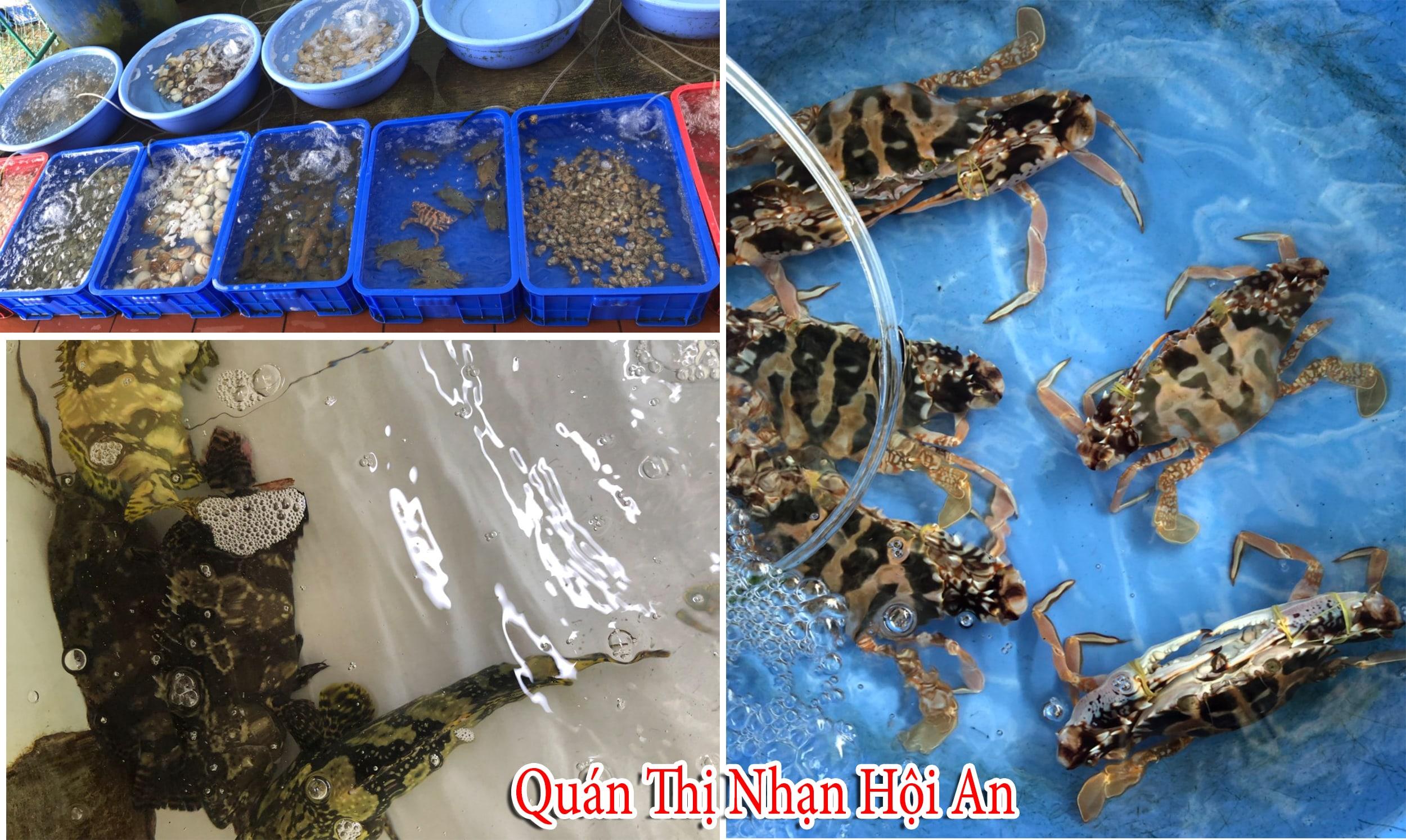Quán Thị Nhạn Hội An đa dạng các loại hải sản tươi sống