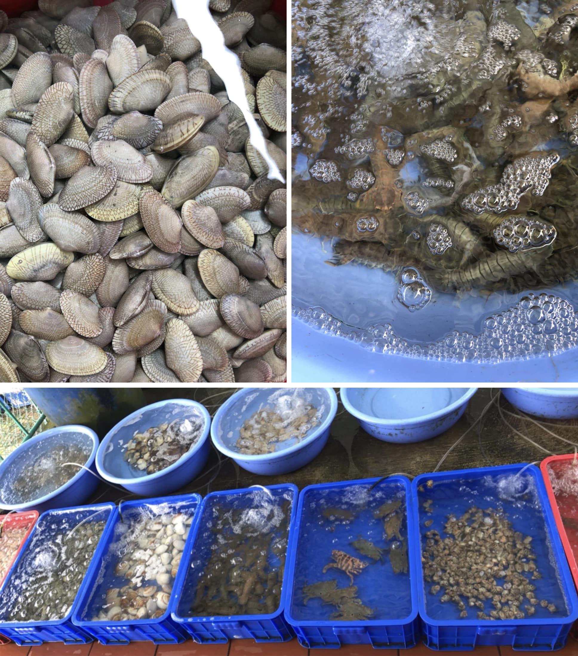 Hình ảnh thực tế các loại hải sản tươi sống tại Quán Thị Nhạn Hội An
