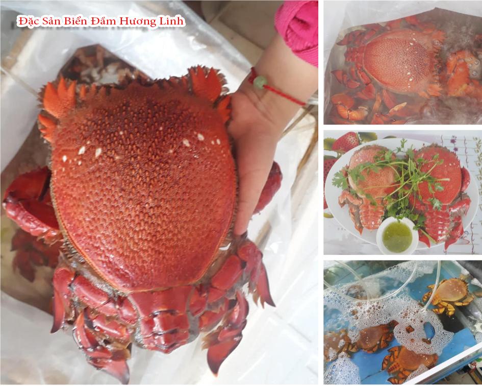 Những món ăn hải sản đặc sản của vùng biển Quy Nhơn tại Hương Linh