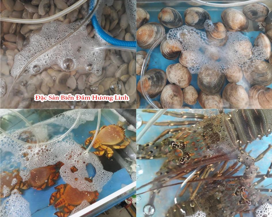 Những món hải sản đặc trưng của vùng biển Quy Nhơn