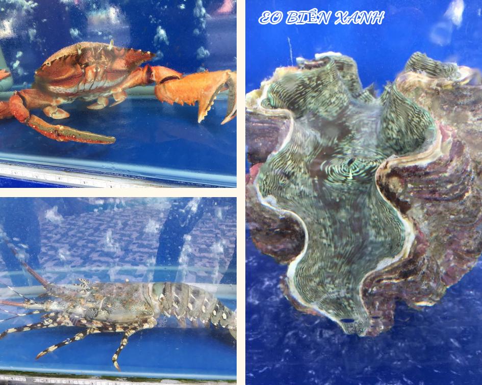 Các loại hải sản vẫn còn tươi sống, đang bơi lội trong hồ kính.