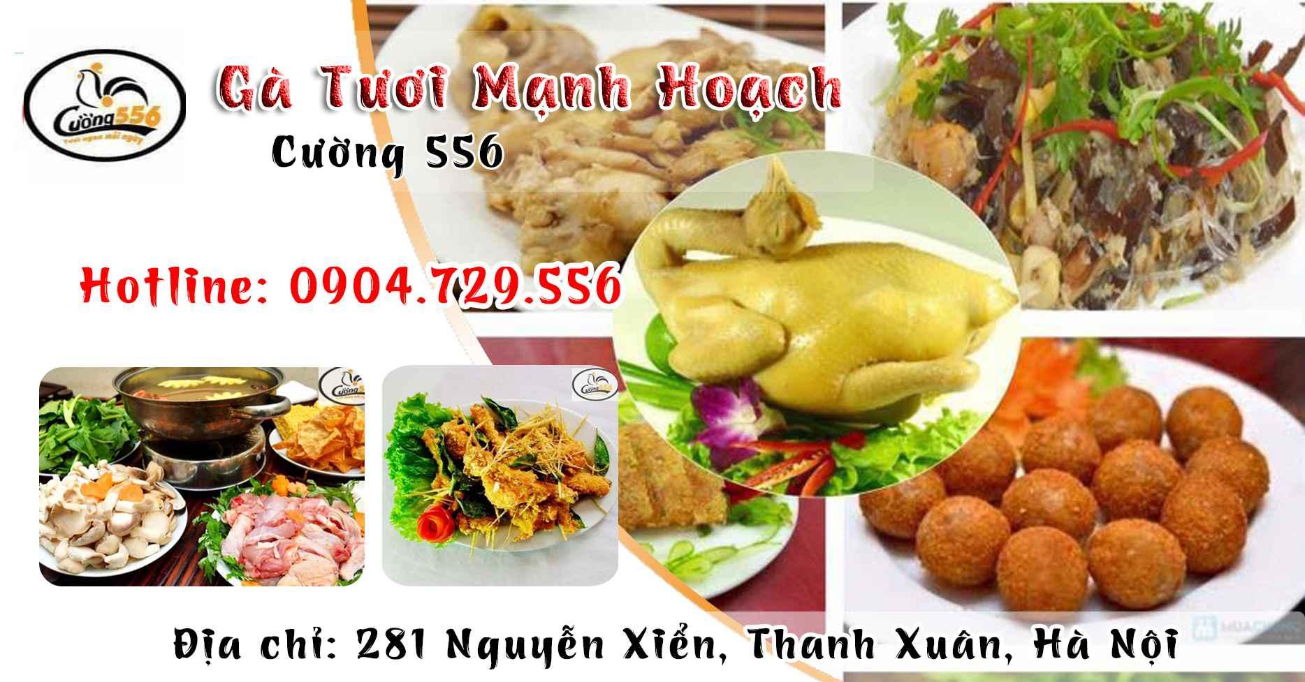 banner-ga-tuoi-manh-hoach-cuong-556