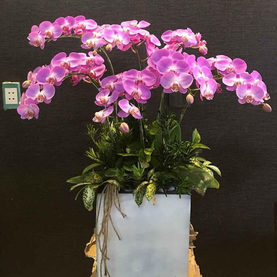 phuong-trang-flower-vung-tau (2)