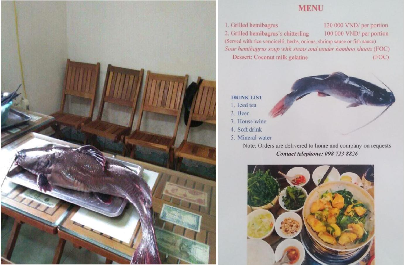 Cá lăng tươi là nguyên liệu làm nên món chả cá tuyệt vời