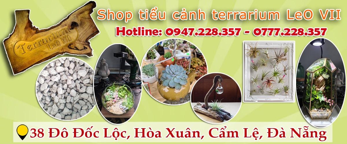 Shop tiểu cảnh Đà Nẵng